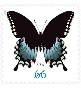 Spicebush Swallowtail (click to order)