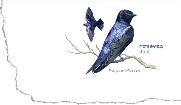 PurpleMartinForever-envelope-TC-BGv1
